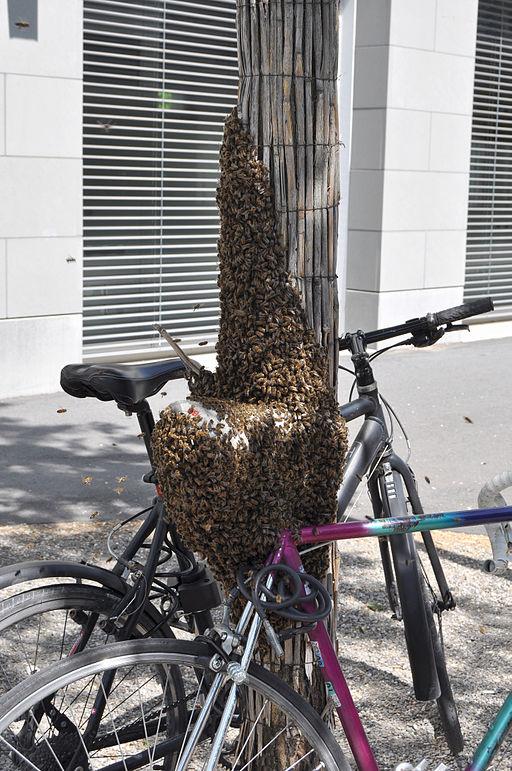Bienenschwarm-Zuerich-Total