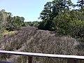 Bike Trail, Jekyll Island, GA - panoramio (6).jpg