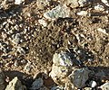 Biological soil crust (6541129329).jpg