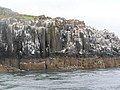 Bird on the cliff of Inner Farne - geograph.org.uk - 180337.jpg