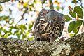 Birds 05.jpg