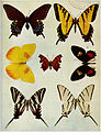 Birds Illustrated Butterflies 0402.jpg