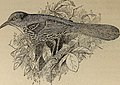 Birds of a Maryland farm - a local study of economic ornithology (1902) (14771883183).jpg