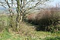Bishop's Nympton, by the track to North Down - geograph.org.uk - 393575.jpg