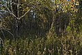 Blacklick Woods-Mixed Maple Forest 1.jpg