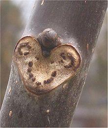 Tak Plant Wikipedia