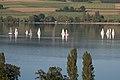 Blick von Beinwil am See auf den Hallwilersee.jpg