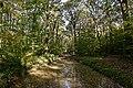 Bois de la Brandelle 2017-10 n03.jpg