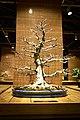 Bonsai exhibition in the Moscow Botanical Garden, Moscow; November 2015 (17).jpg