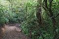 Bosque Eterno De Los Ninos 03.jpg