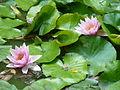 BotanicGardensPisa (87).JPG