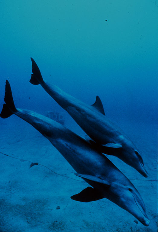 Image Result For Pod Of Dolphins