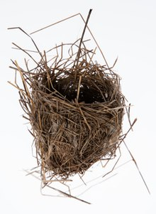 New Zealand fernbird nest from the collection of Auckland Museum