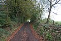Bradninch, lane by White Down Copse - geograph.org.uk - 71635.jpg