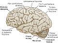 Brain-1-uk.jpg