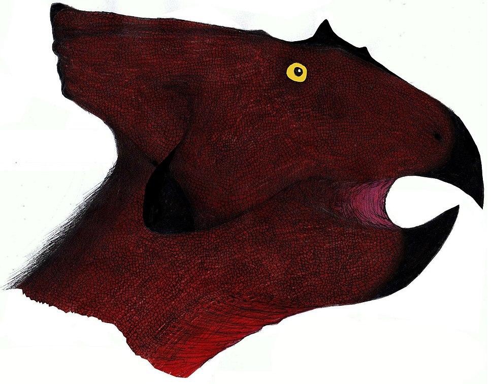 Breviceratops head reconstruction