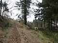Bridleway junction - geograph.org.uk - 716962.jpg