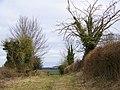 Bridleway to Toyd Down - geograph.org.uk - 1176053.jpg