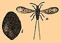 Brockhaus and Efron Encyclopedic Dictionary b31 471-0.jpg