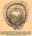 Brockhaus and Efron Encyclopedic Dictionary b76 503-2.jpg