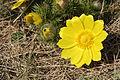 Brzke jaro - tobiasuv vrch - prirodni pamatka - 03.jpg