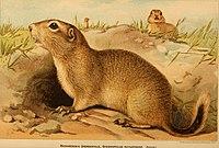 Bulletin - Biological Survey (1893) (19806636874).jpg