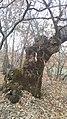 Bungu(ner Koder Livadhit) - panoramio.jpg