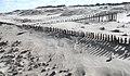 Buried fence (1) - geograph.org.uk - 736528.jpg