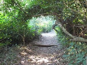 Burman Bush - A Burman Bush walking trail