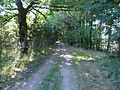 Busserolles GR4 entre Chareyroux et Forêt (2).JPG