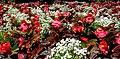 Butchart Gardens - Victoria, British Columbia, Canada (29131392742).jpg