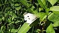 Butterfly (14437249184).jpg