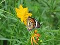 Butterfly (4848898859).jpg