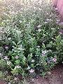Butterfly Garden in Balaji.jpg