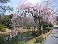 Byodo-in Temple, Uji 宇治 平等院 - panoramio.jpg