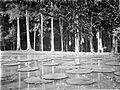 COLLECTIE TROPENMUSEUM Victoria Regia Kigelia pinnata en Sapotaceae TMnr 10006390.jpg