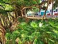 CUBA - panoramio (76).jpg
