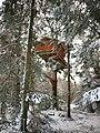 Cabane dans les arbres.JPG