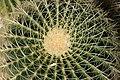 Cactus (4985945245).jpg