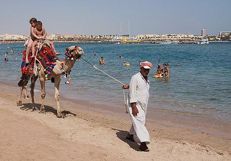 Camel on the beach 2.jpg