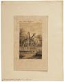 Camelopardalis giraffa - 1700-1880 - Print - Iconographia Zoologica - Special Collections University of Amsterdam - UBA01 IZ21600163.tif