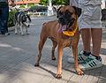 Caminata por los perros y animales Maracaibo 2012 (18).jpg