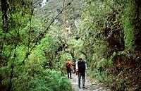 photographie. Un chemin pavé de large dalle s'enfonce sous un couvert végétal dense