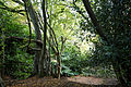 Canopied lane of laurels, Nuthurst, West Sussex, England 5.jpg