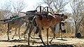 Caravane des nomades9.jpg