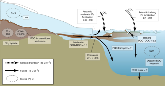 Carbon stores and fluxes in present day ice sheets (2019), and the predicted impact on carbon dioxide (where data exists). Estimated carbon fluxes are measured in Tg C a (megatonnes of carbon per year) and estimated sizes of carbon stores are measured in Pg C (thousands of megatonnes of carbon). DOC = dissolved organic carbon, POC = particulate organic carbon. Carbon stores and fluxes in present day ice sheets.webp