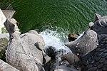 Caserta Fuente de los Delfines 05.jpg