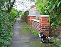 Cat at Hawthorn Avenue, Crewe Road - geograph.org.uk - 258935.jpg