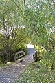 Cat crossing Bowker creek wood bridge. READ INFO IN PANORAMIO-COMMENTS - panoramio.jpg
