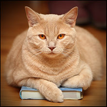 Cat on a Book.jpg